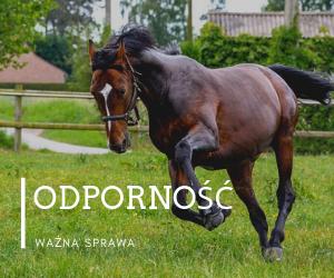 Naturalne sposoby na wiosenną odporność u koni